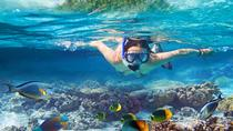 Bavaro Self-Drive Speedboat Tour with Snorkeling and Snuba from La Romana, La Romana, Day Cruises
