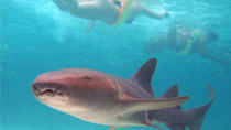 Marinarium Shark and Ray Experience, Punta Cana, Snorkeling