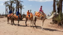 Sunset Camel Ride Tour from Marrakech to the Palms Area, Marrakech, Day Trips