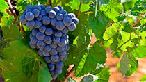 Valencia Wine Tour with Tasting and Lunch, Valencia, Wine Tasting & Winery Tours