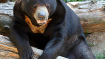 Sun Bear Keeper for a Day: Phnom Tamao Wildlife Rescue Center Day Trip, Phnom Penh