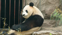 Private Tour: Panda House And Cruise To The Summer Palace With Imperial Cuisine, Beijing, Day Trips