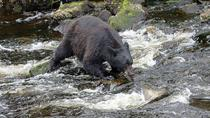 Tongass Rainforest Hiking Expedition, Ketchikan, Hiking & Camping