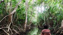 8-Day Exploration of the Amazon Lowlands from Belem, Amazon, Multi-day Tours