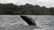Whale Watching Tour from Quepos, Quepos, Dolphin & Whale Watching
