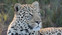 Big Cat Sanctuary and Wine Tasting Day Tour from Cape Town, Cape Town, Safaris