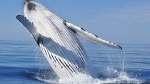 Boat Based Whale Watching Tour from Cape Town, Cape Town, Dolphin & Whale Watching