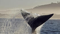 Full-Day Guided Tour Whale Watching on a Boat from Cape Town, Cape Town, Dolphin & Whale Watching