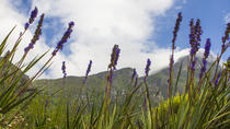Kirstenbosch to Groot Constantia and Hout Bay: Day Tour from Cape Town, Cape Town, Private ...