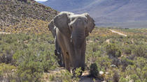 Private Safari Guided Tour from Cape Town, Cape Town, Day Trips