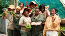 Experience the Heart and Soul of South African Culture in Cape Town, Cape Town, Cultural Tours