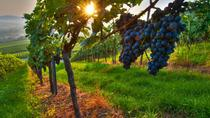 Private Wine Tour: Maipu Wineries from Mendoza, Mendoza, Wine Tasting & Winery Tours