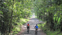 3-Day Biking and Hiking; Nature, Coffee, Culture and Cocora Valley from Pereira, Pereira, Multi-day...