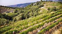 Organic Wine Tour from Nice, Nice, Wine Tasting & Winery Tours