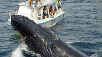 Bay of Samana Whale Watching Tour from Puerto Plata, Puerto Plata, Dolphin & Whale Watching