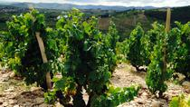 Private Tour: Beaujolais Day Tour with Wine Tasting from Lyon, Lyon
