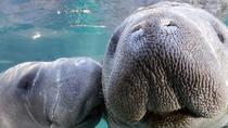 Indian River Manatee Kayaking Tour, Orlando, Kayaking & Canoeing