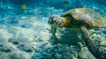Cayman West Bay Sightseeing Tour, Cayman Islands, Half-day Tours
