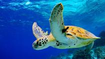 Grand Cayman Shore Excursion: West Bay Sightseeing Tour, Cayman Islands, Half-day Tours