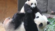 Private 3-Day Family Tour Combo Package: Classic Beijing Plus Panda House And Happy Valley ...