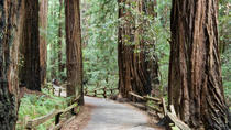 Muir Woods and Sausalito Tour plus Bay Cruise, San Francisco, Day Trips