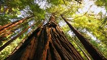 Muir Woods, Giant Redwoods and Sausalito Half-Day Trip, San Francisco, Bus & Minivan Tours