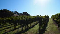 Private Tour: Wine Country Day Trip from San Francisco, San Francisco