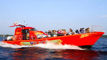 1000 Islands High-Speed Adventure Cruise, Thousand Islands, Day Cruises