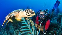 Grand Cayman SCUBA Diving, Cayman Islands, Scuba Diving