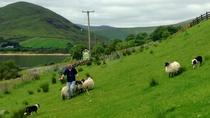 Hill Sheep Farming and Sheepdog Trialling Experience in Galway , Galway, Day Trips