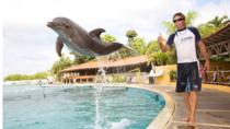 Nuevo Vallarta Dolphin Trainer for a Day , Puerto Vallarta, Swim with Dolphins