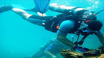 Sir Francis Drake Island Full-Day Scuba Diving Adventure, Panama City, Rail Tours
