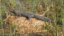 Honey Island Swamp Tour with Pick-up from New Orleans, New Orleans, Half-day Tours
