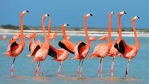 Private Tour: Flamingos, Mayan Temples, Rio Lagartos and Ek Balam, Cancun, Private Sightseeing Tours