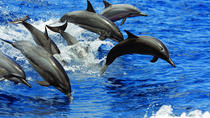Dolphin-watching - and whales when in-season - Kailua-Kona, Big Island of Hawaii, Dolphin & Whale ...