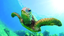 Turtle Canyon Snorkel Cruise by Catamaran, Oahu, Snorkeling