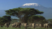 3-Day Amboseli National Park Experience from Nairobi, Nairobi, Multi-day Tours