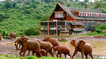 6-Day 3 Park Safari from Nairobi , Nairobi, Multi-day Tours