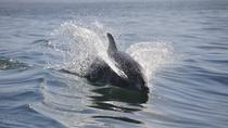 Dolphin Manatee Sightseeing River Tours, Cocoa Beach, Dolphin & Whale Watching