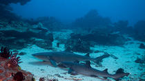 Dive with Sharks in Padangbai, Bali, Shark Diving
