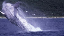 Tahiti Whale Watching Cruise, Papeete, Dolphin & Whale Watching