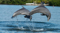 Clearwater Beach Day Trip from Orlando with Dolphin Encounter Cruise, Orlando