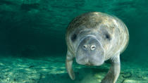 Self-Drive Swim with Manatees on the Crystal River, Orlando, Nature & Wildlife