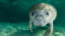 Self-Drive Swim with Manatees on the Crystal River , Orlando, Nature & Wildlife