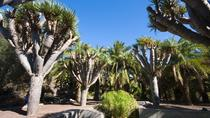 Excursion to Volcano Bandama and Botanic Garden with Wine Route, Gran Canaria, Day Trips