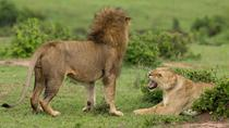 4-Day Maasai Mara and Lake Nakuru Safari from Nairobi, Nairobi, Multi-day Tours
