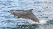 Private Shell Island Dolphin and Snorkel Excursion, Panama City Beach, Dolphin & Whale Watching