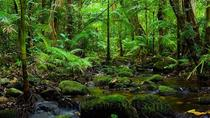 Cape Tribulation and Daintree Rainforest Day Trip from Cairns or Port Douglas, Cairns & the...