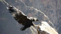 Full Day Trip to Colca Canyon from Arequipa, Arequipa, Multi-day Tours