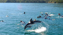 Half-Day Dolphin Swimming Eco-Tour from Picton, Picton, Swim with Dolphins